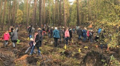 Leute pflanzen Bäume im Wald