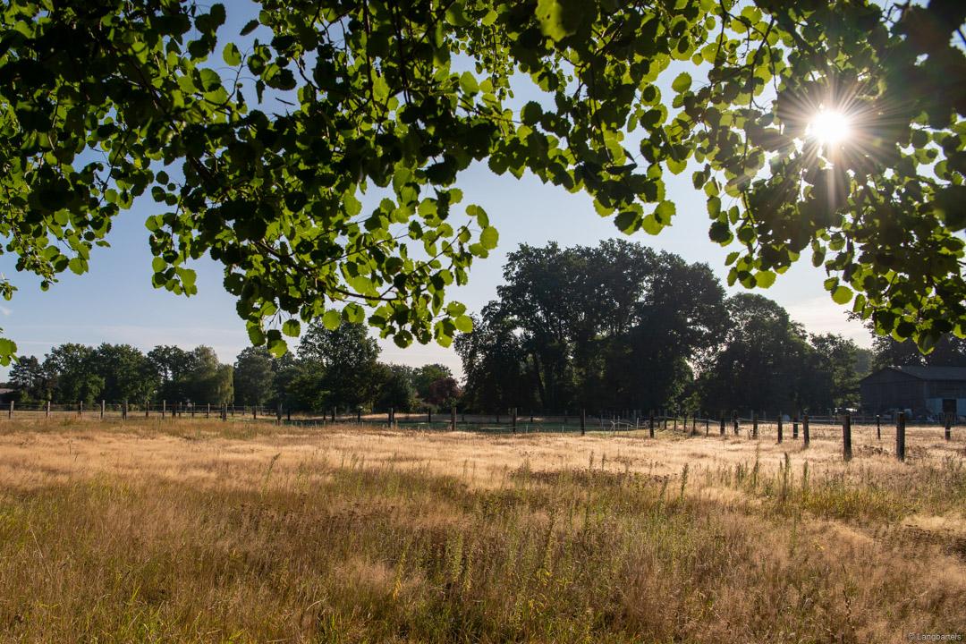 Weise mit Bäumen und Sonnenstrahlen